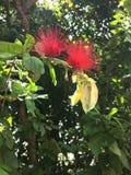 Flor en jardín botánico Imagenes de archivo