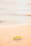 Flor en la arena Imagen de archivo