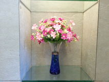 Flor en la caja Imágenes de archivo libres de regalías