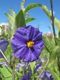 Flor en la ciudad Fotos de archivo