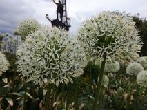 Flor en la ciudad Imagen de archivo libre de regalías