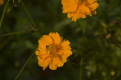 Flor en la floración Fotos de archivo libres de regalías