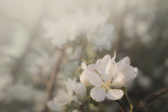 Flor en la floración en primavera fotografía de archivo libre de regalías