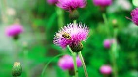 Flor en la flor hermosa del jardín fotos de archivo