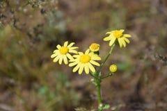Flor en la isla de Khortytsya Fotografía de archivo