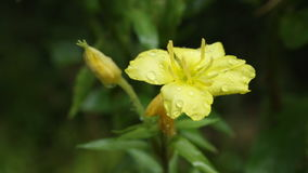 Flor en la lluvia almacen de video