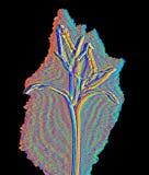 Flor en la luz infrarroja Fotos de archivo libres de regalías
