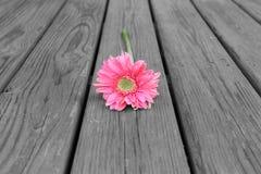 Flor en la madera B&W Fotografía de archivo