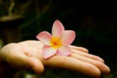 Flor en la mano Foto de archivo libre de regalías