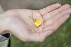 Flor en la mano imágenes de archivo libres de regalías