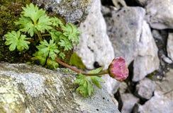 Flor en la montaña Foto de archivo libre de regalías