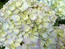 Flor en la naturaleza ecuatoriana Fotos de archivo