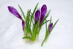 Flor en la nieve imágenes de archivo libres de regalías