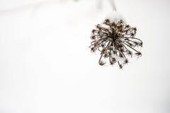 Flor en la nieve Fotografía de archivo libre de regalías