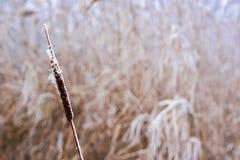 Flor en la nieve fotos de archivo
