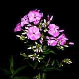 Flor en la noche Imagen de archivo libre de regalías