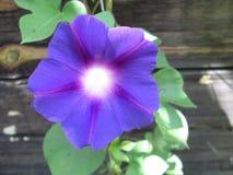 Flor en la pared Foto de archivo