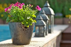 Flor en la piscina Imágenes de archivo libres de regalías