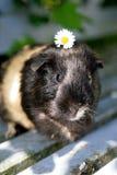 Flor en la pista Imagen de archivo libre de regalías