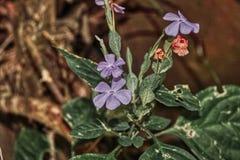 Flor en la selva - cascada Hua Hin Thailand de la lila de Pala U imagen de archivo libre de regalías