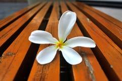 Flor en la tabla Fotografía de archivo libre de regalías