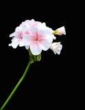 Flor en la tierra de la parte posterior del negro Imagen de archivo libre de regalías