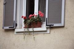 Flor en la ventana imagenes de archivo