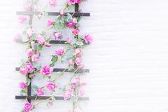 Flor en ladrillo de la pared Imagen de archivo libre de regalías