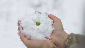 Flor en las manos del calor metrajes