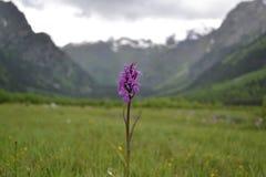 Flor en las montañas Fotos de archivo libres de regalías