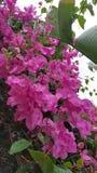 Flor en lluvia Imágenes de archivo libres de regalías