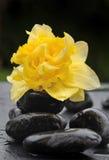 Flor en los guijarros negros Imagen de archivo