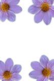 Flor en marco fotografía de archivo libre de regalías