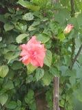 flor en mi jardín fotos de archivo