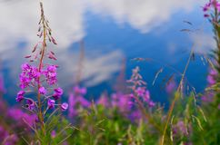Flor en naturaleza fotos de archivo libres de regalías