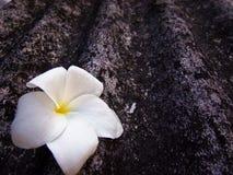 Flor en negro y blanco foto de archivo