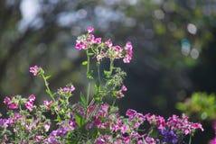 Flor en Pangung Imagen de archivo libre de regalías