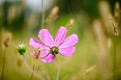 Flor en prado del verano foto de archivo