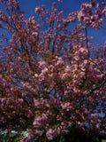 Flor en primavera foto de archivo libre de regalías