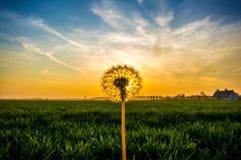 Flor en puesta del sol Fotografía de archivo