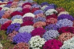 Flor en resorte Imágenes de archivo libres de regalías