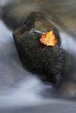 Flor en roca Imagen de archivo libre de regalías