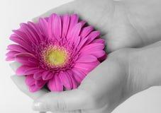 Flor en su mano Fotos de archivo