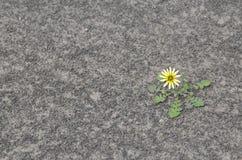 Flor en suelo seco Imagen de archivo libre de regalías