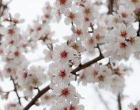 Flor en un árbol Foto de archivo libre de regalías