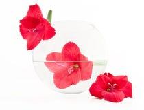 Flor en un agua llenada florero redondo Fotografía de archivo libre de regalías