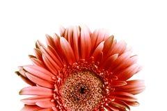 Flor en un blanco Imágenes de archivo libres de regalías