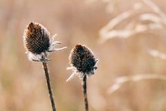 Flor en un campo Fotografía de archivo libre de regalías