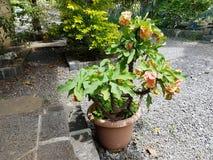 Flor en un crisol Foto de archivo libre de regalías