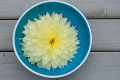 Flor en un cuenco Fotografía de archivo libre de regalías